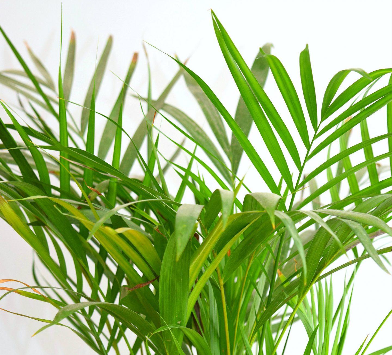 Top 5 makkelijke kamerplanten